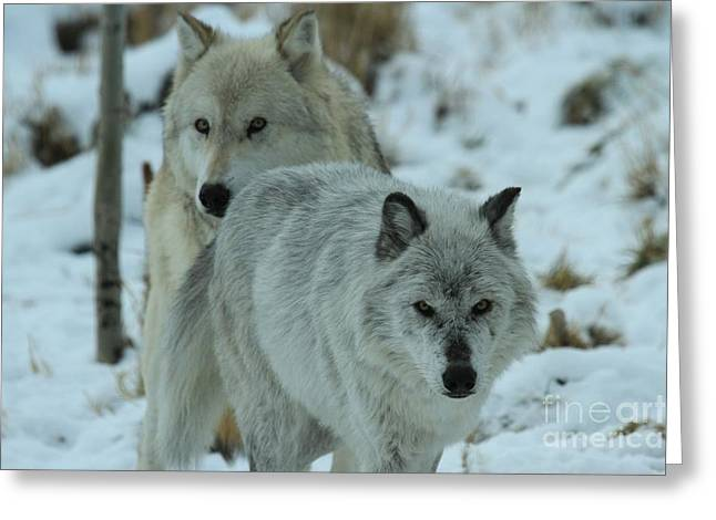 West Yellowstone Greeting Cards - The Hunters Greeting Card by Adam Jewell