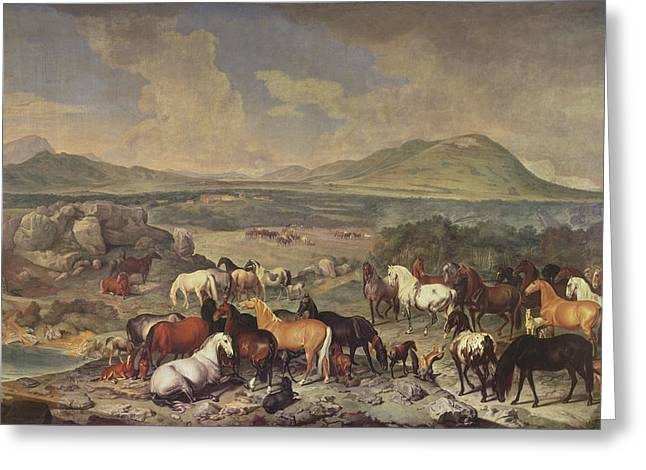 Foals Greeting Cards - The Imperial Stud With Lipizzaner Horses Greeting Card by Johann Georg Hamilton