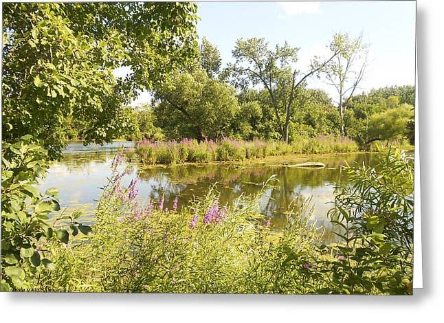 Indiana Flowers Greeting Cards - The Indiana Wetlands 2 Greeting Card by Verana Stark