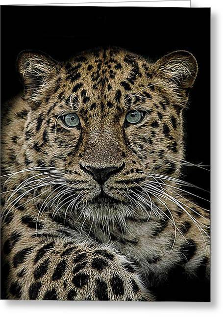 Amur Greeting Cards - The interrogator  Greeting Card by Paul Neville