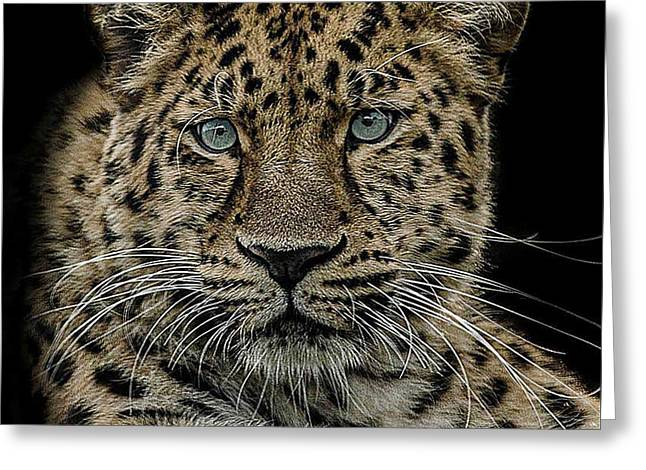 Leopards Greeting Cards - The interrogator  Greeting Card by Paul Neville