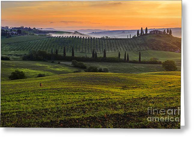 Tuscan Hills Greeting Cards - The intruder Greeting Card by Yuri Santin