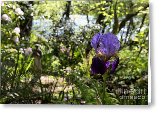 Francis Greeting Cards - The Iris and St Francis Greeting Card by Belinda Greb