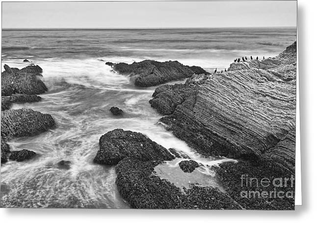 Sea Birds Greeting Cards - The jagged rocks and cliffs of Montana de Oro State Park in California in Black and White Greeting Card by Jamie Pham