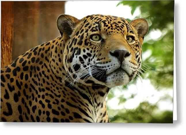 Jaguars Greeting Cards - The Jaguar  Greeting Card by Saija  Lehtonen