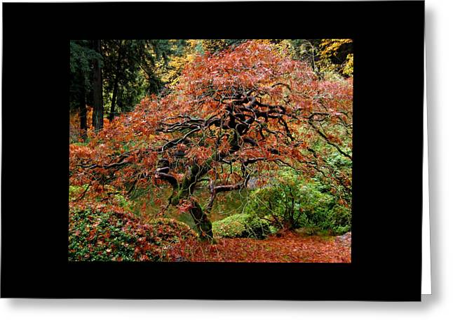 Photos Greeting Cards - The Japanese Maple At The Japanese Gardens PDX Greeting Card by Thom Zehrfeld