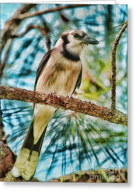 Chatty Greeting Cards - The Jay Greeting Card by Deborah Benoit