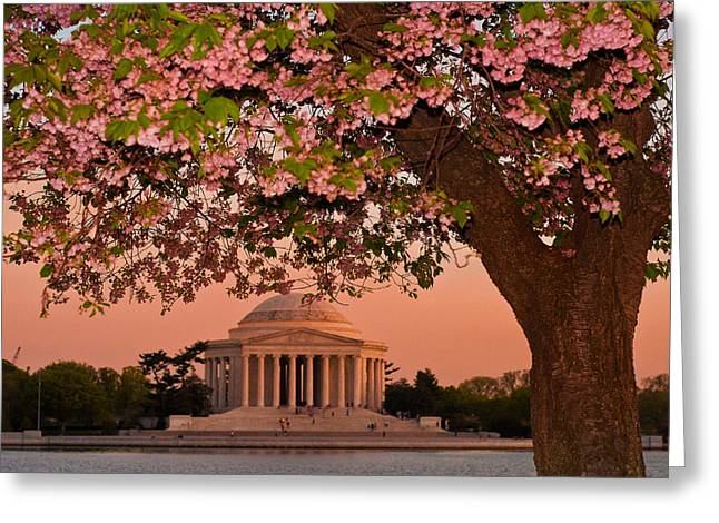 D700 Greeting Cards - The Jefferson Memorial Framed by a Cherry Tree Greeting Card by Mitchell R Grosky