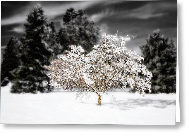 The Jeweled Tree Greeting Card by Vicki Jauron