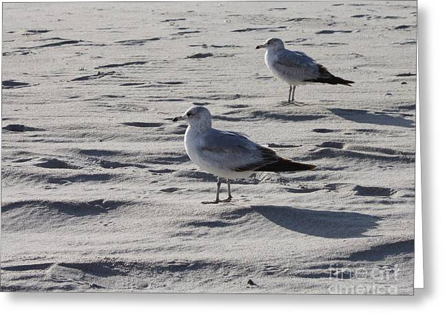 On The Beach Greeting Cards - The Jones Beach Generals Greeting Card by John Telfer
