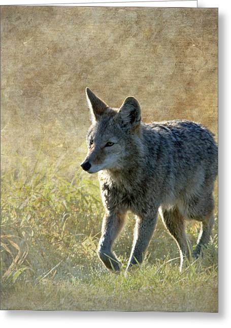 Wildlife Refuge. Greeting Cards - The Journey Greeting Card by Angie Vogel