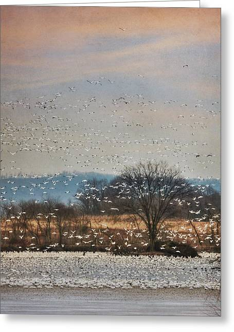Geese Greeting Cards - The Journey Begins Greeting Card by Lori Deiter