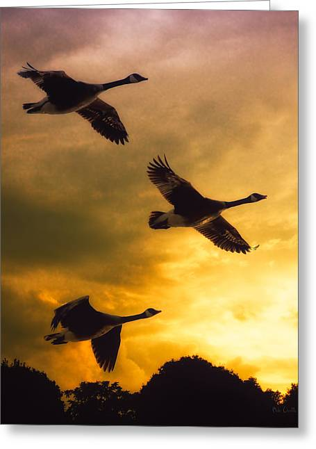 Migration Greeting Cards - The Journey South Greeting Card by Bob Orsillo