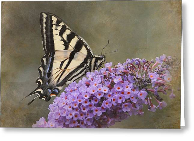 Butterfly On Flower Greeting Cards - The Joy of Nectar Greeting Card by Angie Vogel