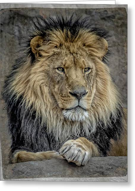 Wildcats Digital Greeting Cards - The King Greeting Card by Ernie Echols