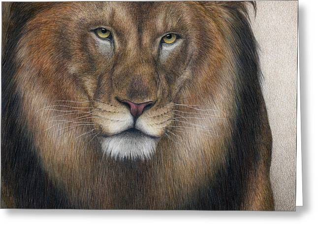 Male Lion Greeting Cards - The King Grows Weary  Greeting Card by Pat Erickson