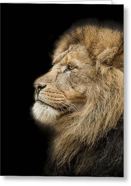 Lions Photographs Greeting Cards - The King is dead long live the King Greeting Card by Paul Neville