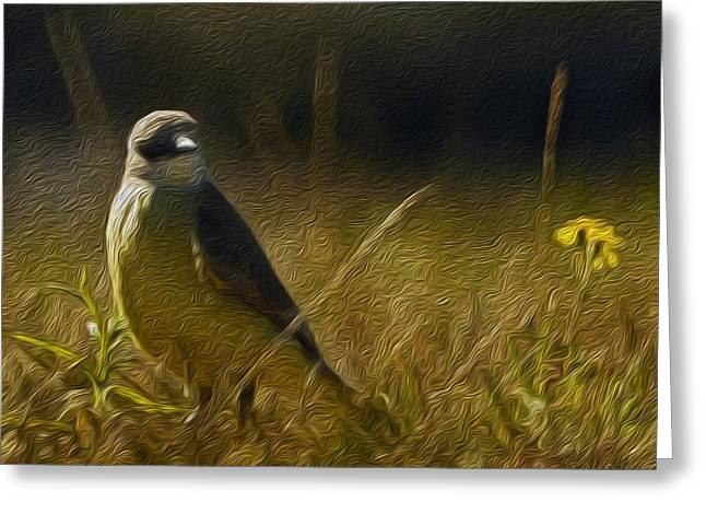 The Kingbird And The Flower Greeting Card by Ryker Vorton