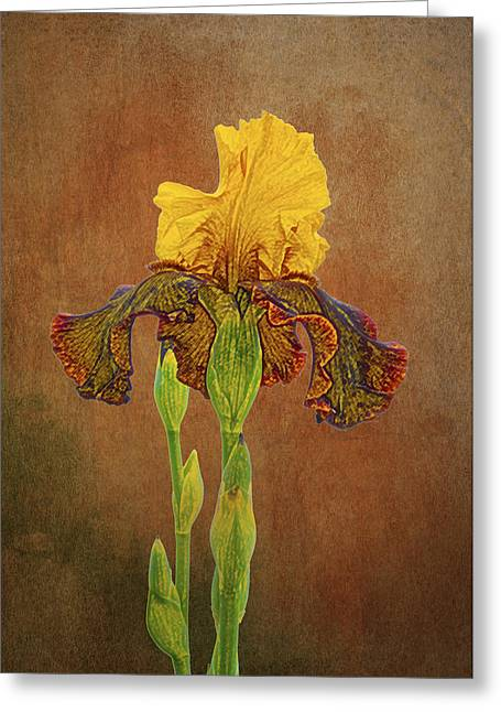 Yellow Bearded Iris Greeting Cards - The Kings Prize Iris Greeting Card by Michael Peychich