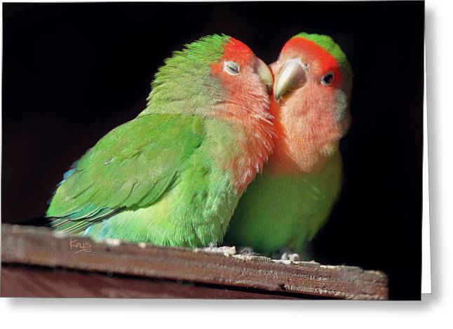Peach-faced Lovebird Greeting Cards - The Kiss Greeting Card by Krys Bailey