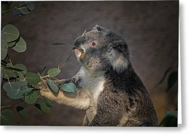 Koala Digital Greeting Cards - The Koala Greeting Card by Ernie Echols