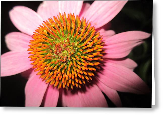 Close Focus Nature Scene Greeting Cards - The Koosh Ball Greeting Card by Mike Podhorzer