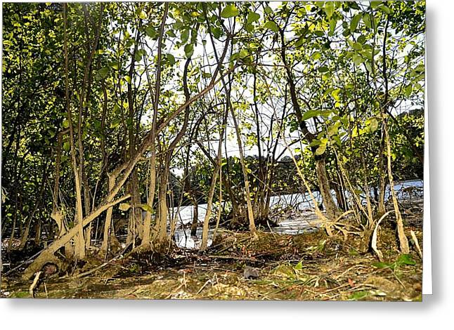 Bottomlands Greeting Cards - The Lake Through the Brush Greeting Card by James Potts