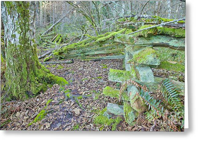 Nature Greeting Cards - The land of Moss Greeting Card by Graham Foulkes