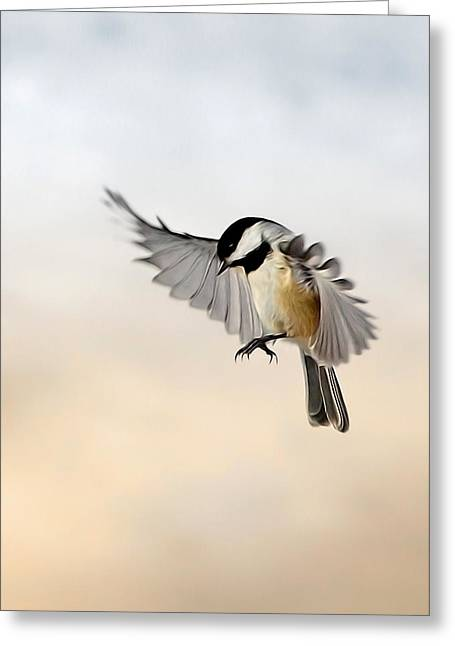Small Birds Greeting Cards - The landing Greeting Card by Bill  Wakeley
