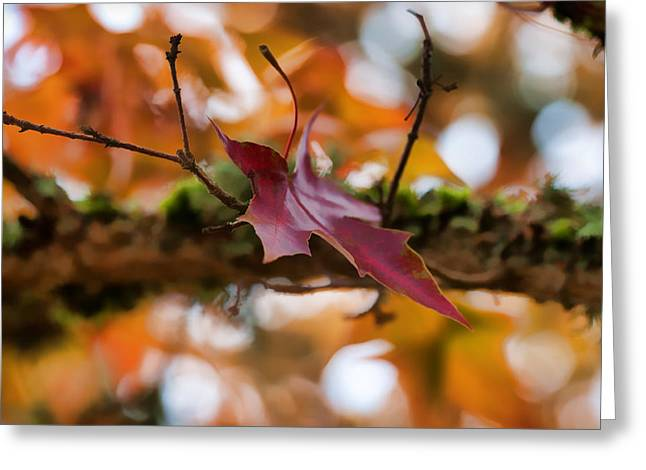 Red Leaves Greeting Cards - The Landing Greeting Card by Bonnie Bruno