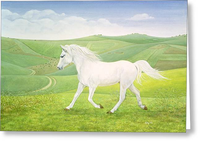 Wild Horse Greeting Cards - The Landscape Horse Greeting Card by Ditz