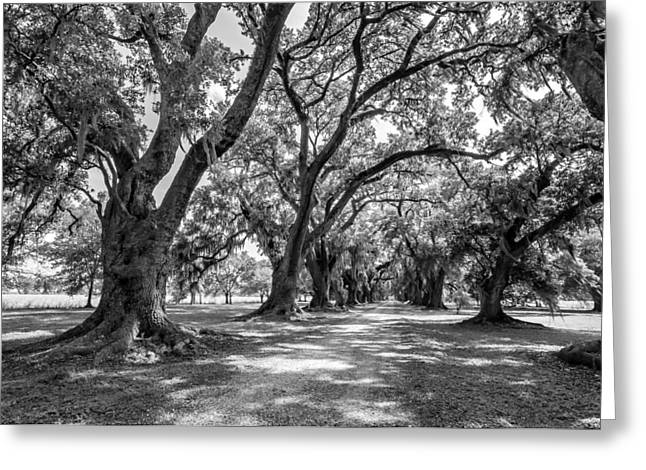 Slaves Photographs Greeting Cards - The Lane bw Greeting Card by Steve Harrington