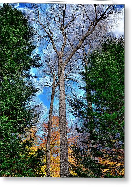 Surreal Landscape Greeting Cards - The Last Bit of Autumn Greeting Card by David Patterson