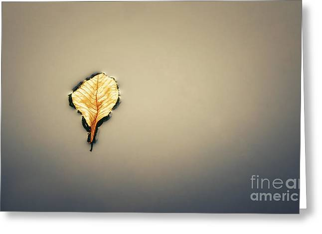 Fallen Leaf On Water Greeting Cards - The last breath of a fallen leaf Greeting Card by Giuseppe Esposito