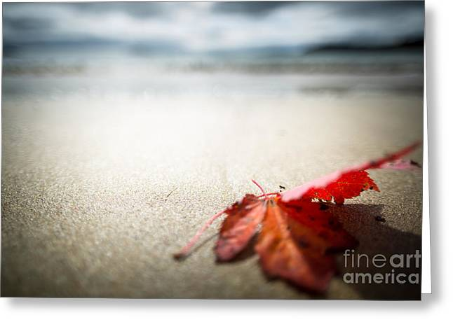 Beach Scenery Greeting Cards - The Last Leaf Greeting Card by Susan Cole Kelly Impressions