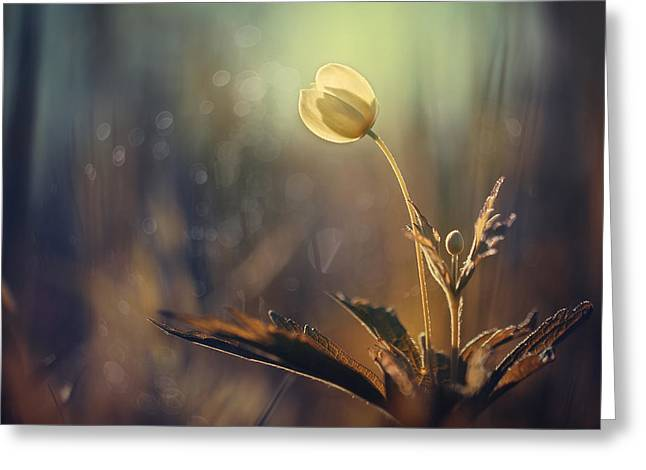 Artwork Flowers Greeting Cards - The Last Light Greeting Card by Magda  Bognar