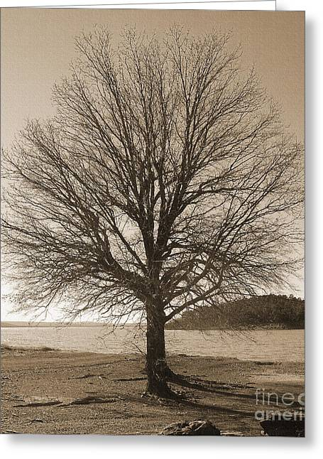 The Last Oak Greeting Card by R McLellan