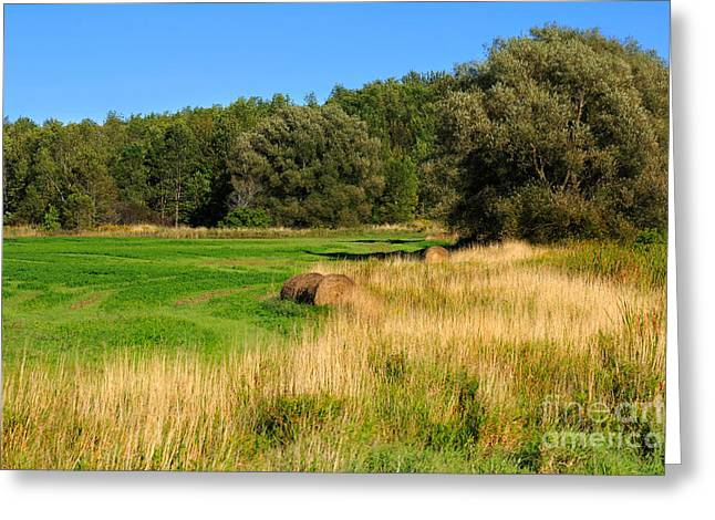 Barrie Greeting Cards - The Last of Summer Greeting Card by Louise Heusinkveld
