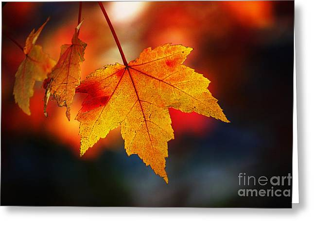 Icons Prints On Canvas Greeting Cards - The Last of the Autumn Leaves Greeting Card by Nishanth Gopinathan
