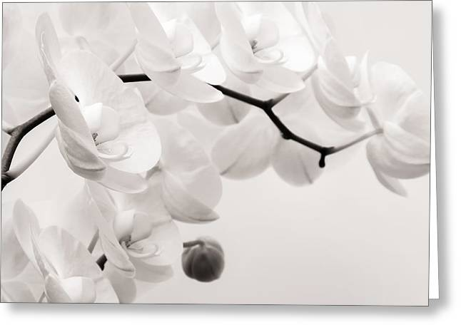 Orchids Greeting Cards - The Last Orchid Greeting Card by Wim Lanclus