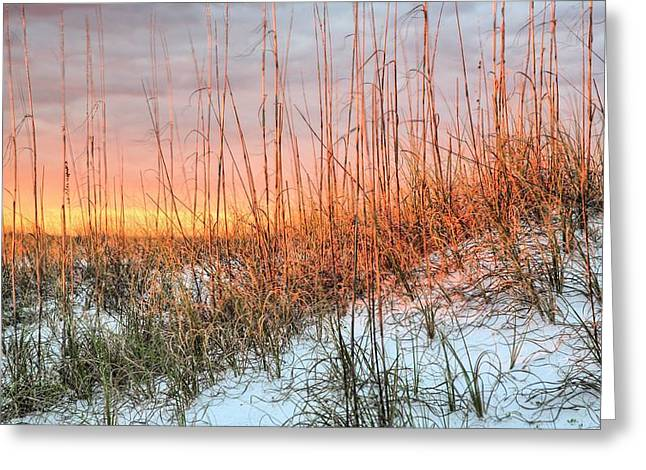 Florida Panhandle Greeting Cards - The Last Rays Greeting Card by JC Findley
