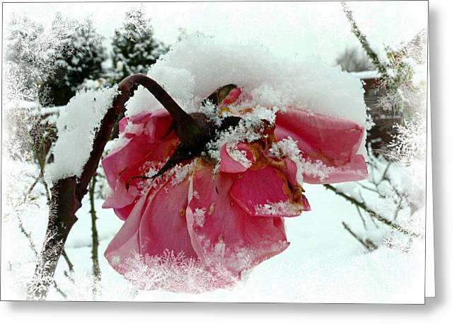 Frosty Mixed Media Greeting Cards - The Last Rose Greeting Card by Morag Bates