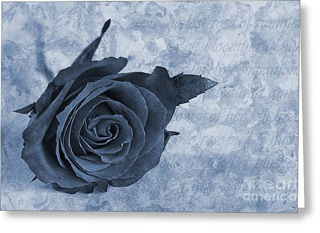 Love Poetry Greeting Cards - The last rose of summer cyanotype Greeting Card by John Edwards