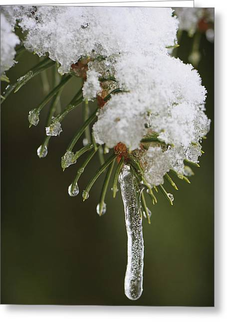 Nature Study Greeting Cards - The Last Snow Greeting Card by Adam Romanowicz