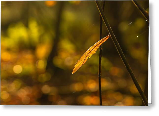 Green Leafs Greeting Cards - The last to fall Greeting Card by Chris Fletcher