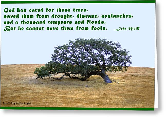 Tree Huggers Greeting Cards - The Last Tree John Muir Quote Greeting Card by Barbara Snyder