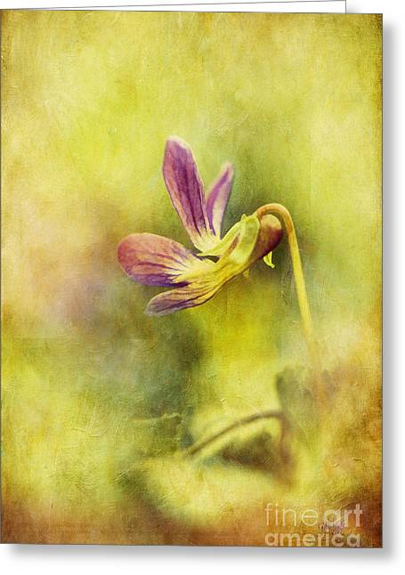 Textured Floral Greeting Cards - The Last Violet Greeting Card by Lois Bryan
