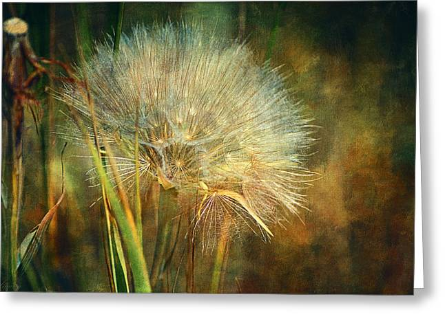 Close Focus Nature Scene Greeting Cards - The Last Wish  Greeting Card by Maria Angelica Maira