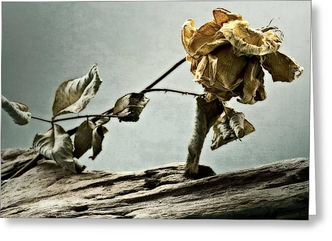 Donna Lee Greeting Cards - The Last Yellow Rose of Summer Greeting Card by Donna Lee