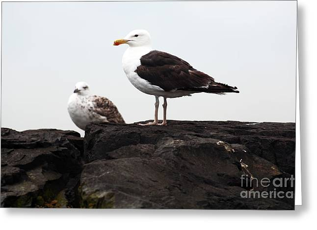 Down The Shore Greeting Cards - The Leader Greeting Card by John Rizzuto